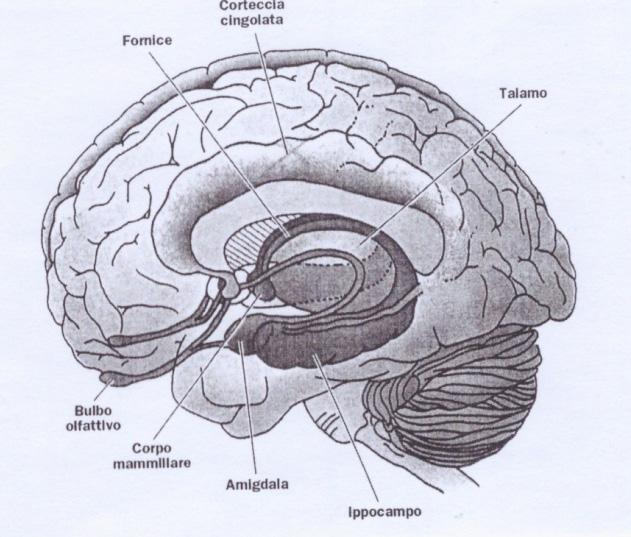 La neurobiologia delle emozioni